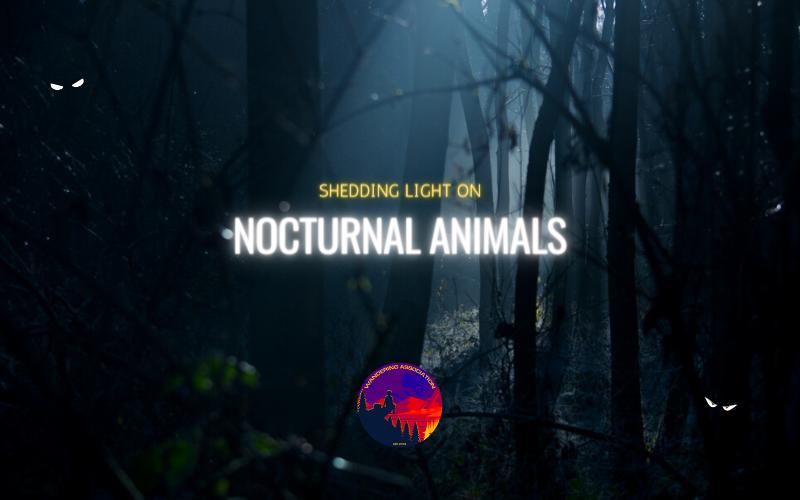 SHEDDING LIGHT ON NOCTURNAL ANIMALS